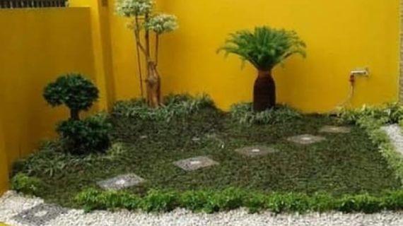 Petani Rumput Gajah Mini | Gratis Ongkir+Pasang+Pupuk